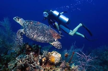 The-Belize-Barrier-Reef-6